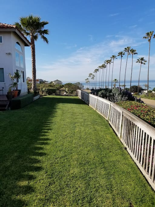 Front yard view of palms and ocean.