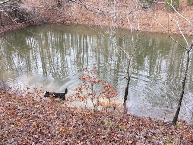 Groups welcome at Nature Monastery: Rhythm Farm