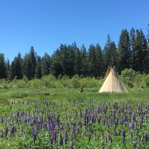 Alpine Meadow Tipi Lodge, 8 acres on river front.