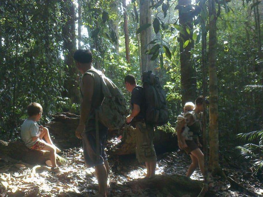 Jungle Edie Homestay Trekking And