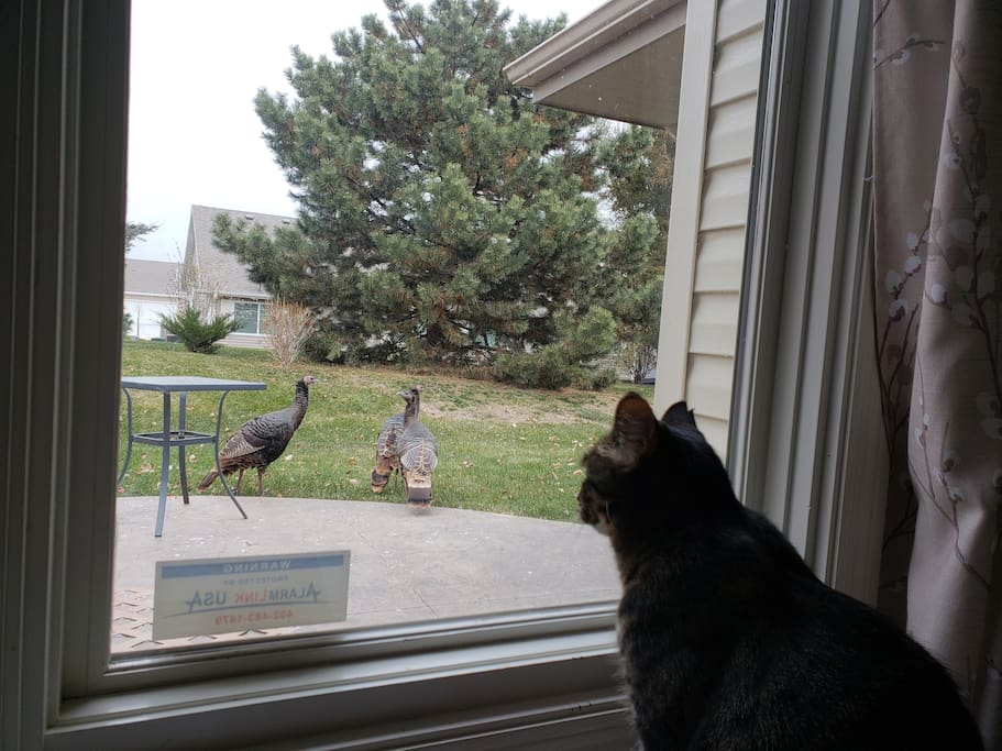 Peaches the cat eyeing a turkey or two.