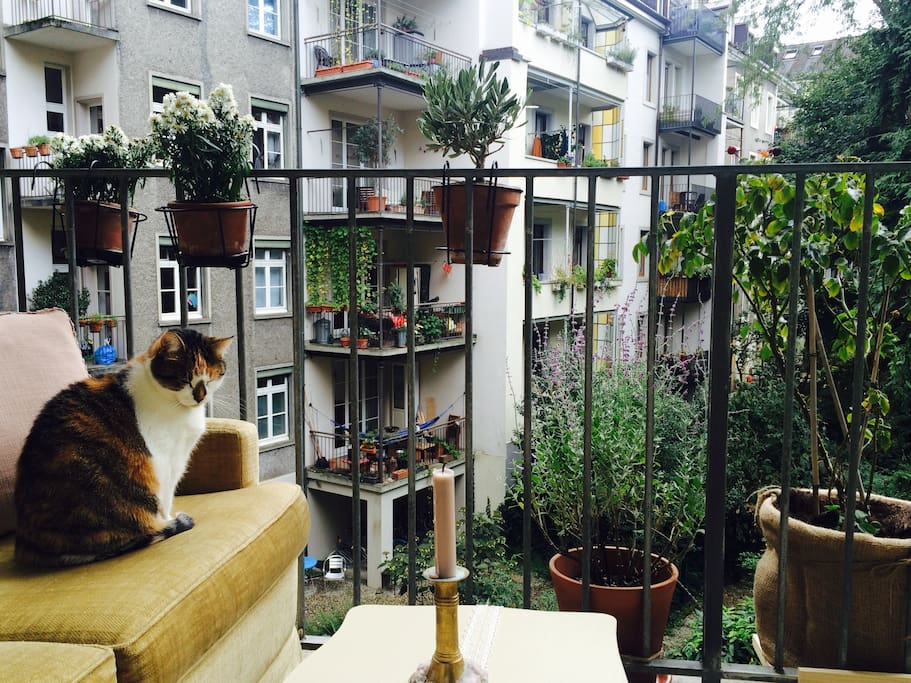 Balcony with cat.