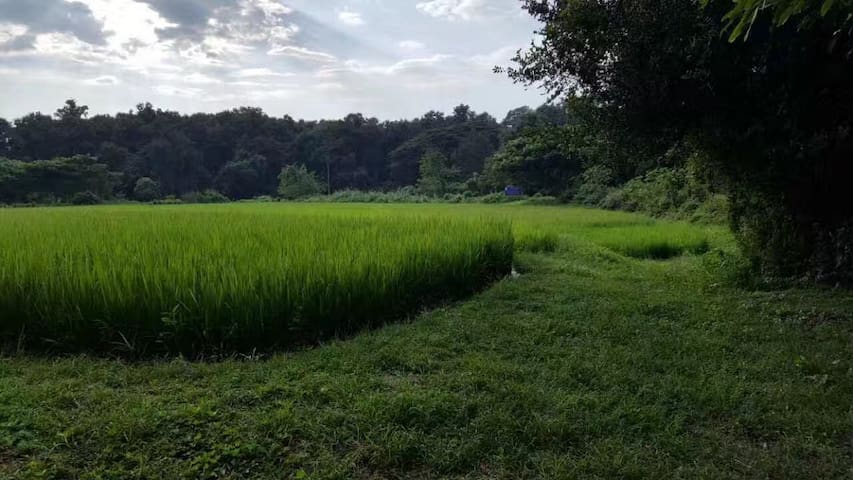 Ban Ping Doi1: Enjoy 1.6 acre at your comfort zone - Tambon Mae Pong - House