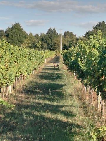 Maison neuve au milieu des vignes