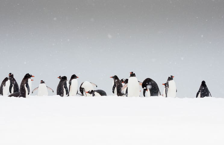 Antarctica Room