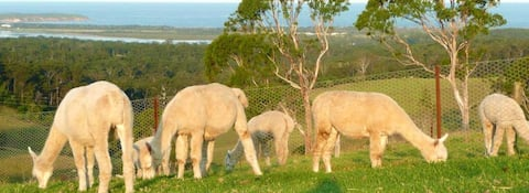 Jandarra Alpaca Farmstay. WOW Views