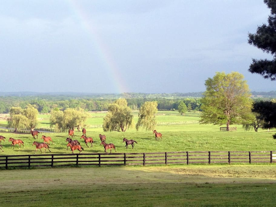 Rainbows and running horses
