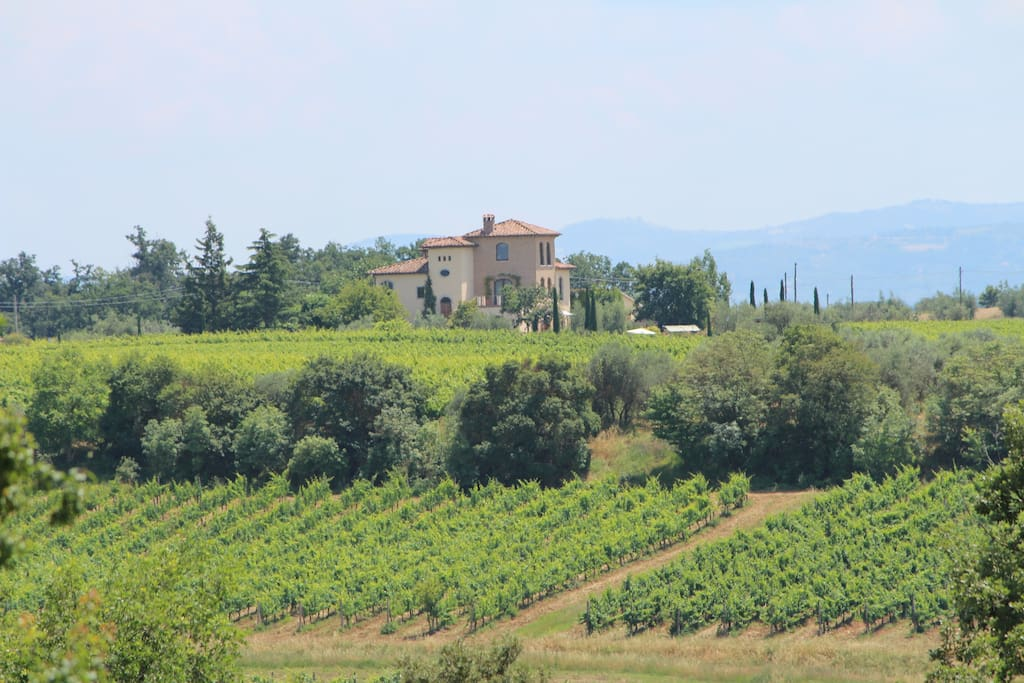 Villa La Valiana is settled on top of a vinyard-covered hill, located right midway between Montepulciano and Cortona