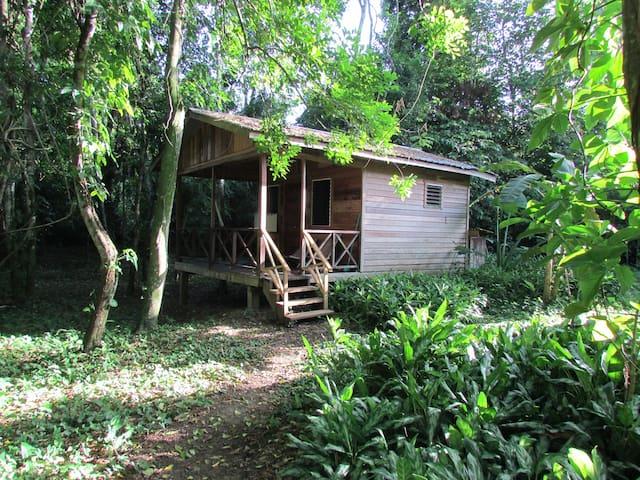 Parrot Nest Jungle Cabin