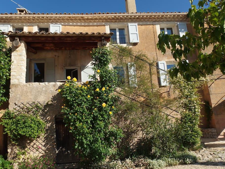 gros plan sur le rosier et la terrasse couverte