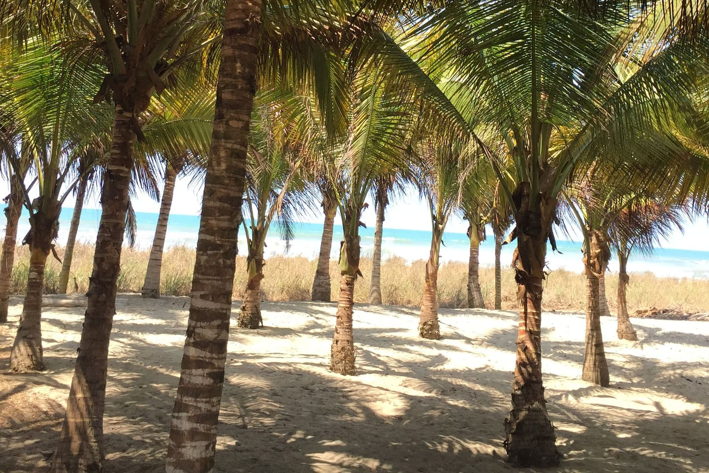 60 coconut frees on beach in front of property,  chill out here with our hammocks