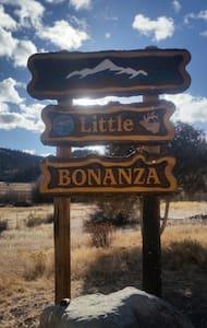 Little BONANZA Bonzai