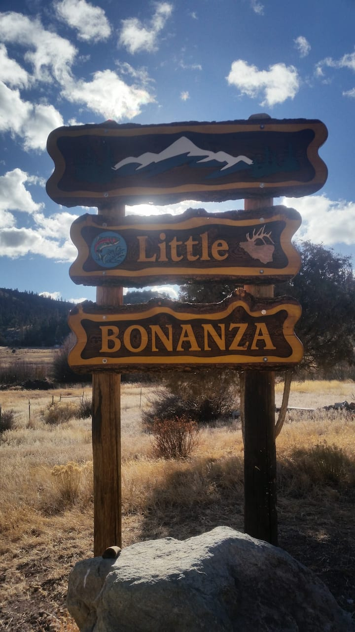 Little BONANZA Bonzai