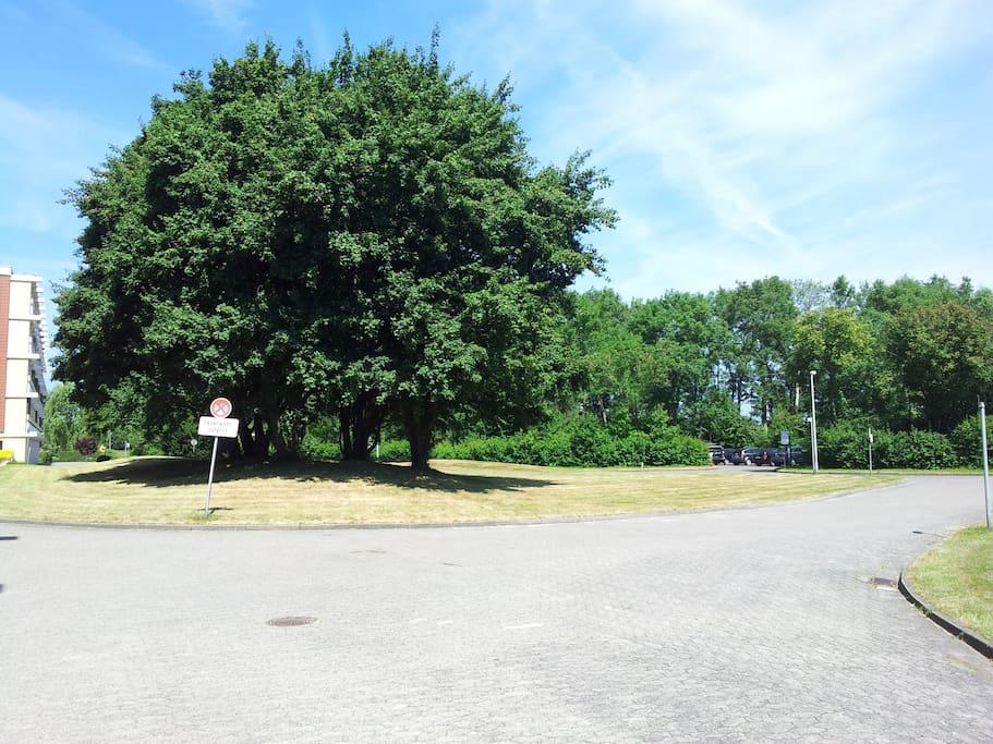 Schöner Park vor dem Haus