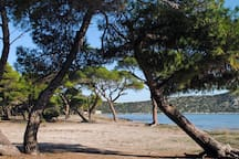 Schinias pine forest- beach