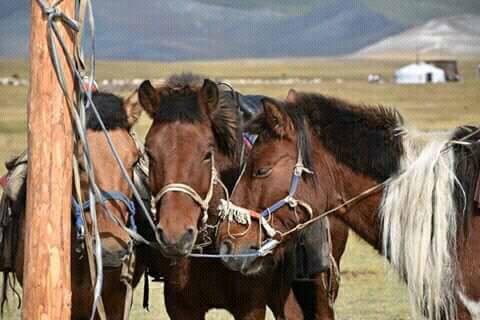 Khuvsgul lake of Mongolia.