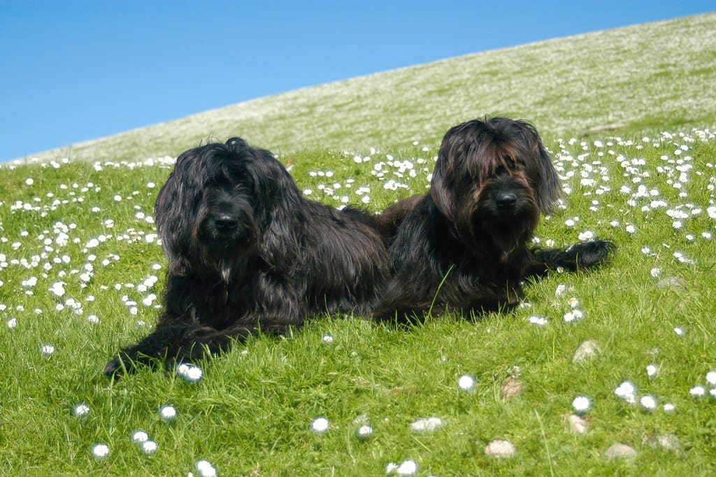 The dogs: Molly & Marmite