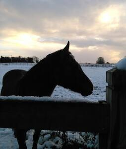 Quarter Horse Lodge