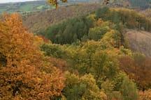 Herfstkleuren in de Ardennen Couleurs automnales dans les Ardennes