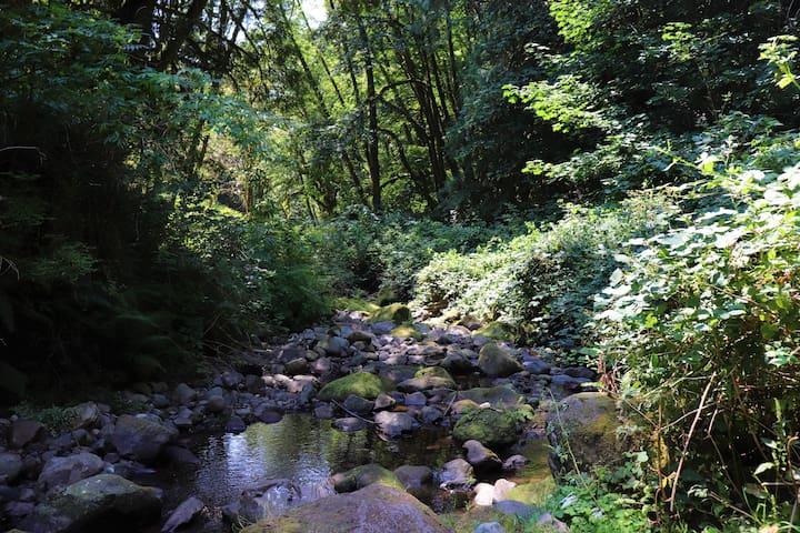 The creek (summer)