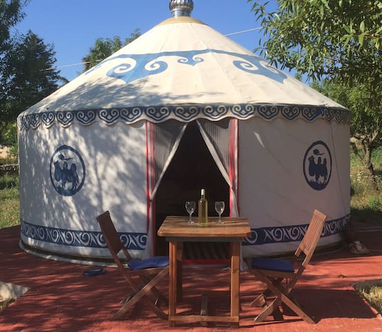 The Yurt is situated among almond trees.
