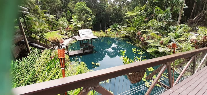 Dog Friendly King Room Rainforest Retreat