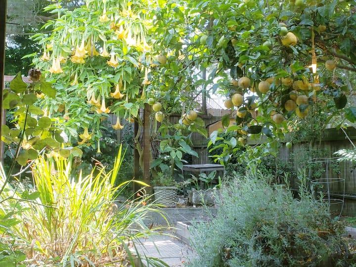Pet-friendly studio, garden view in Excelsior