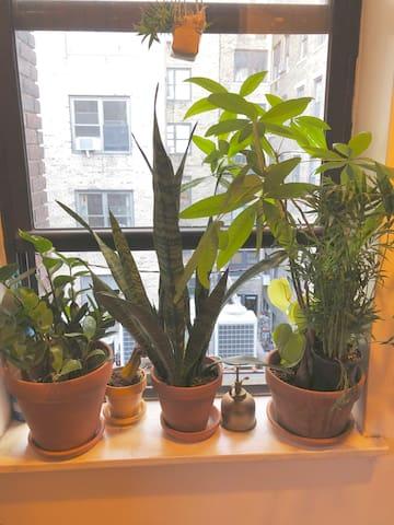 Apartment flora and fauna