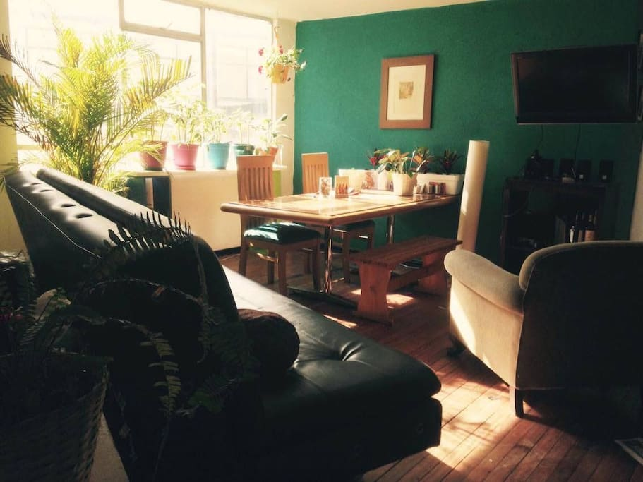 Big living room with free wi fi, tv, lots of plants, and a big table to eat.
