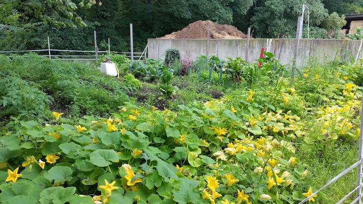 Gemüsegarten mit reiner Kompostdüngung