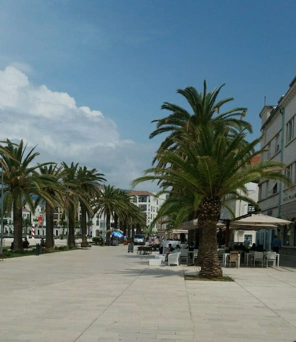 Pine - promenade in Tivat. 5 minutes by foot from our house
