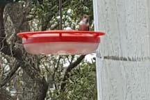 Hummingbirds visit feeder on back porch