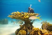 we dive cuba