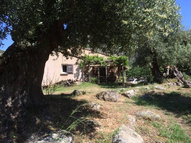 maison chez babbo - Calenzana - Dům