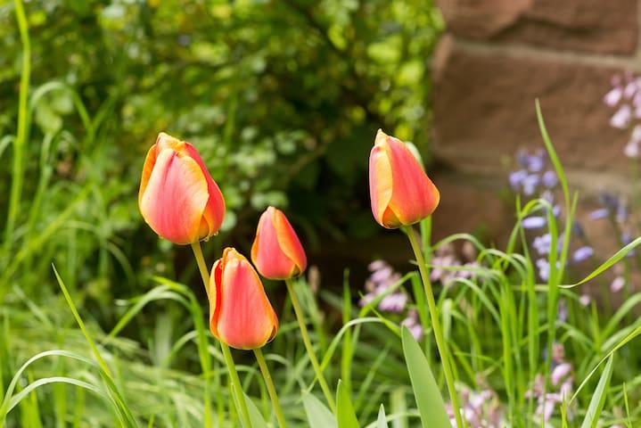 Unser Garten ist wild und überrascht uns jedes Jahr mit einer neuen Blumenpracht.