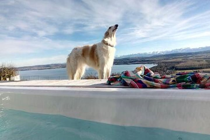 Swiss Borzoi House - Cherry Tree View & Spa
