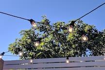 Festoon Lighting in Alfresco Area