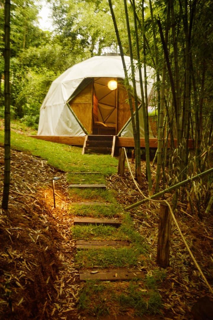 Domo geodésico: glamping na floresta de bambu.