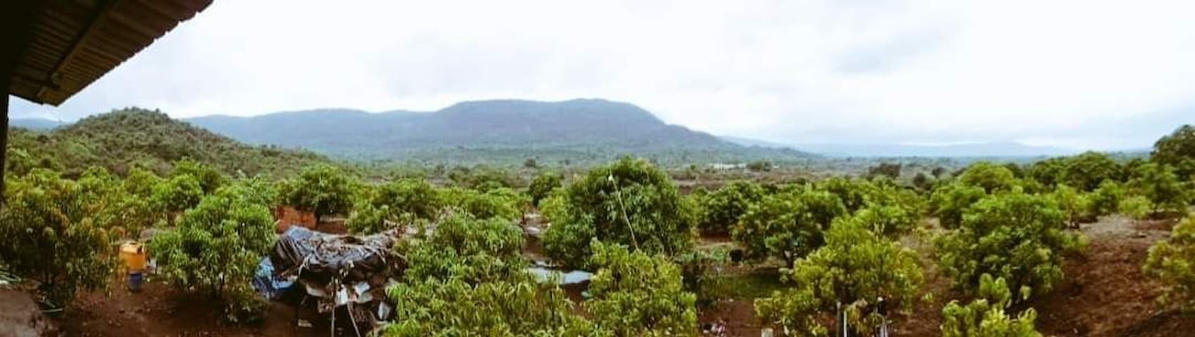 Shinde Farms,River Side Alphonse, Coconut Farm