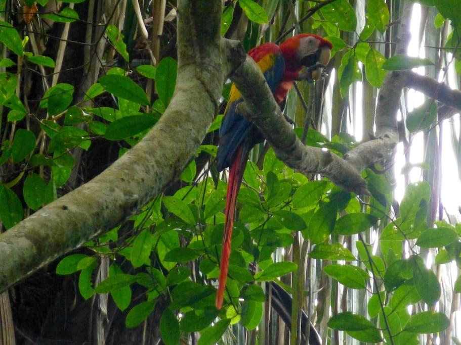 mas de 264 especies diferentes de aves  more than 264 different bird species
