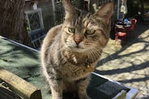 Linguini is a refugee from the streets of Atlantic City. Very shy so approach her slowly. She lives outside all summer and  may curl up on an outside deck chair. Jus' saying in case you're allergic to cats. (She is not permitted in the house).
