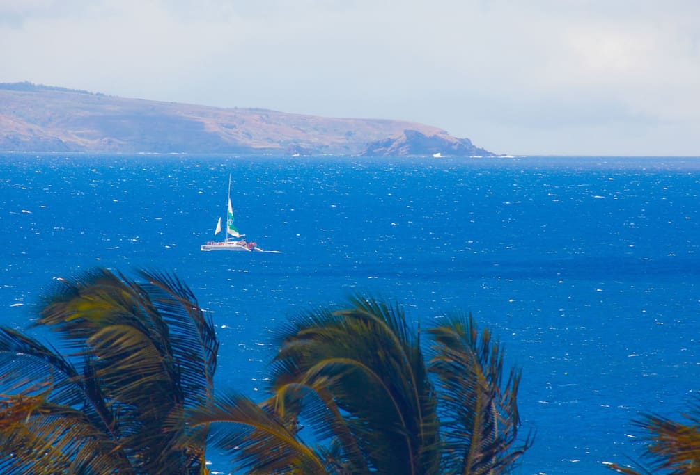 Passing Maui sailboats and humpback whales are a frequent sight