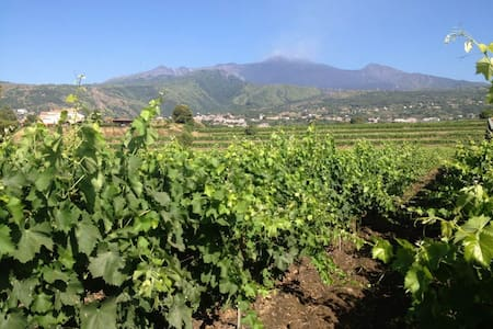 Agriturismo Tenuta San Michele - SANTA VENERINA - Bed & Breakfast - 2