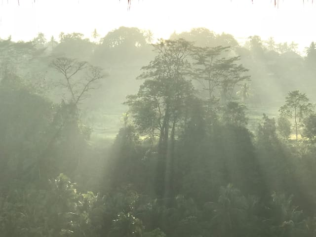The sun rays bring magic to the misty morning.