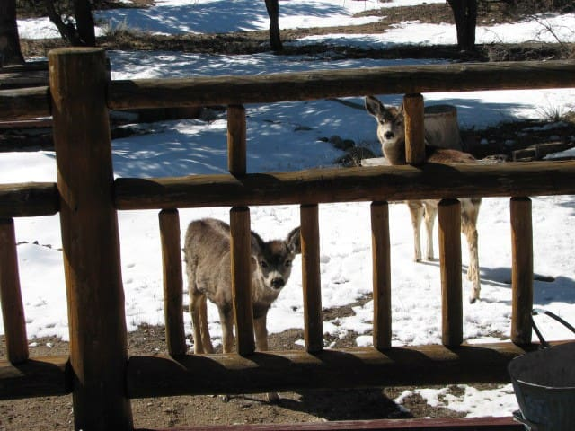 Cozy Log Home Hideaway - Buena Vista - Cabin