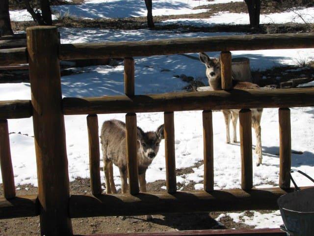 Cozy Log Home Hideaway - Buena Vista - Cottage