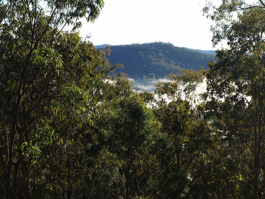 The view of the treetops, ridge and early morning mist from the master bedroom