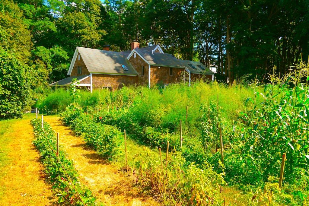 An expansive garden  surrounds the house