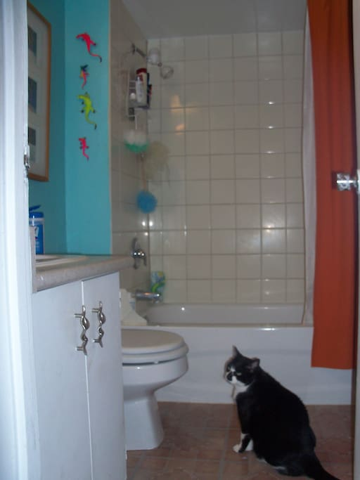 Resident feline in the washroom........