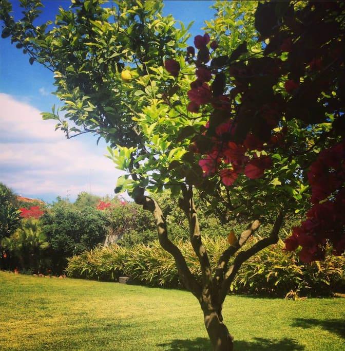 gli alberi e la natura